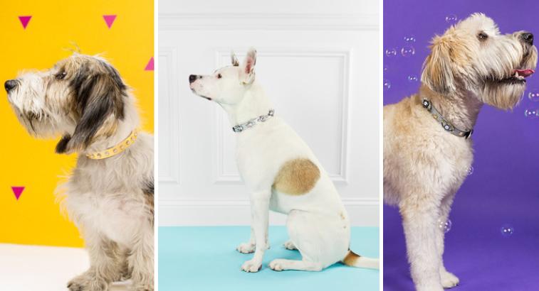 bauble-bar-dog-collars